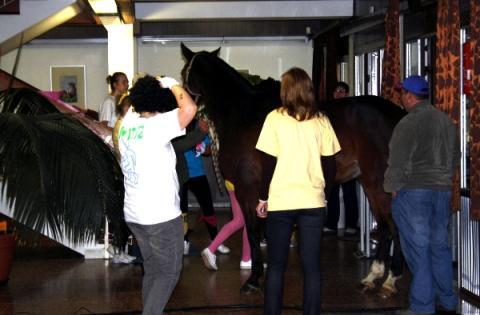 Óóó igen, ez az Avasi portája... és egy ló a folyosón :))))